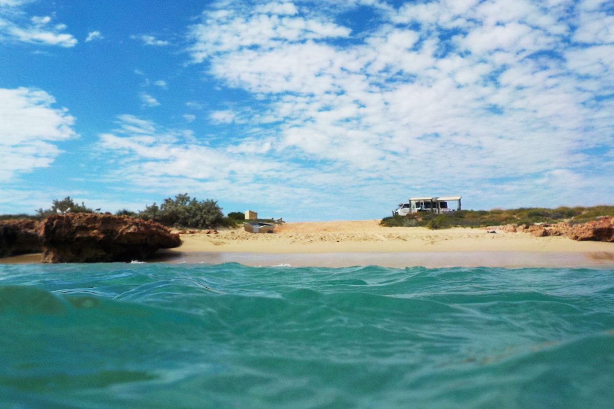 Ningaloo Safari