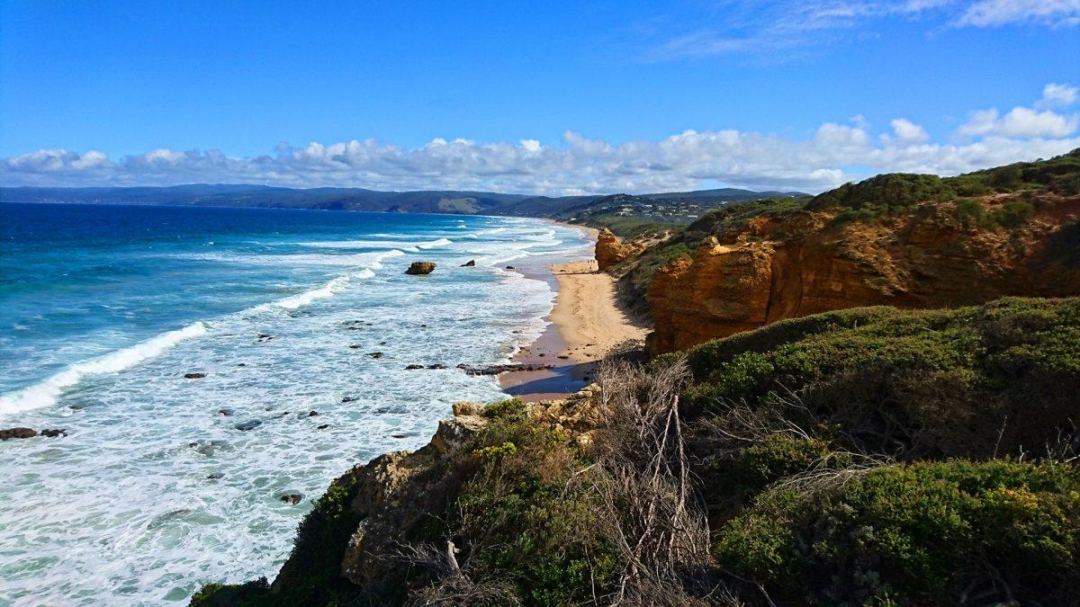 Dingo cuddles & Great Ocean Road